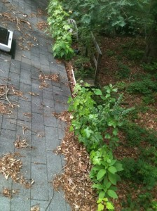 Gutter cleaning contractors Cary, NC