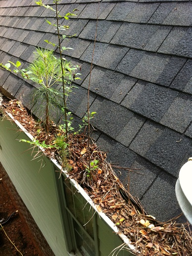 It's more than a gutter cleaning – Cary, NC
