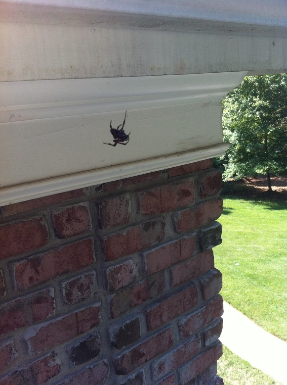 Spider season!  Time to wash the house!